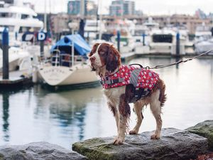 10 Tips for Boating With Pets